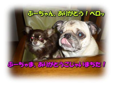 image13_20120112222747.jpg