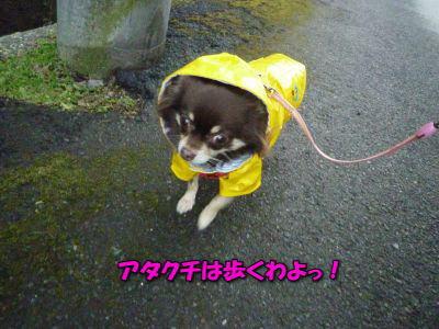 image14_20120109024946.jpg