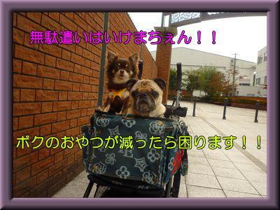 image15_20111118232346.jpg