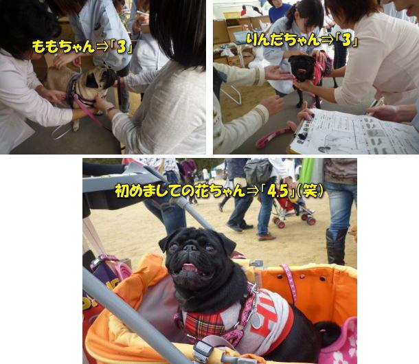 image17_20120122140715.jpg