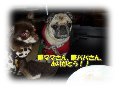 image19_20111110151510.jpg