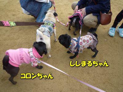 image19_20120122142027.jpg