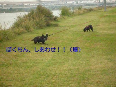 image1_20111102170315.jpg