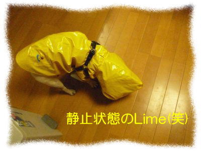 image1_20111112023605.jpg