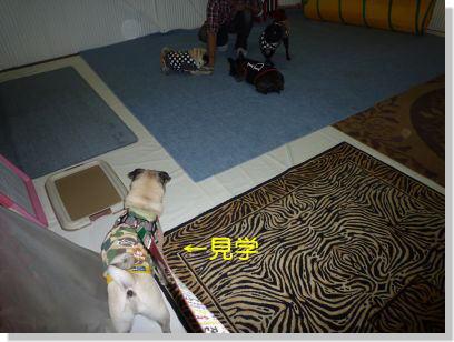 image1_20111112225857.jpg