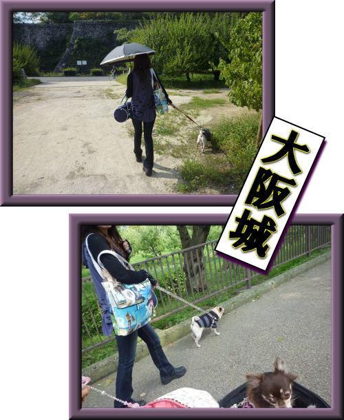 image1_20111118012145.jpg