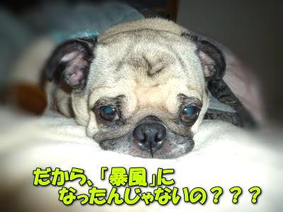 image1_20120405011338.jpg