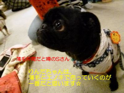 image26_20111009010806.jpg