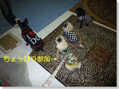 image2_20111112225856.jpg