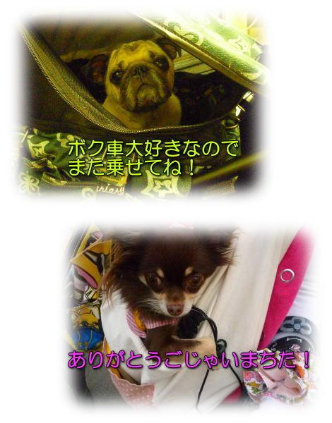 image32_20111205234152.jpg