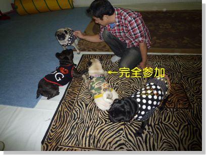 image3_20111112225856.jpg