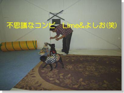 image4_20111112230502.jpg