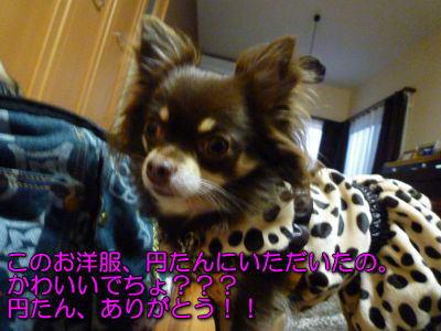 image5_20111108230409.jpg