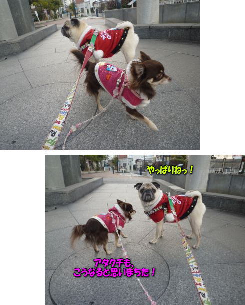 image5_20111228023305.jpg