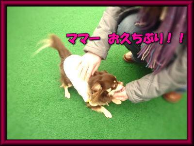 image5_20120309203727.jpg