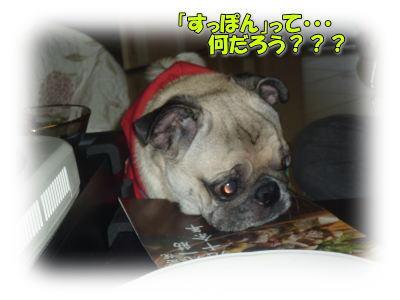image6_20111110142908.jpg