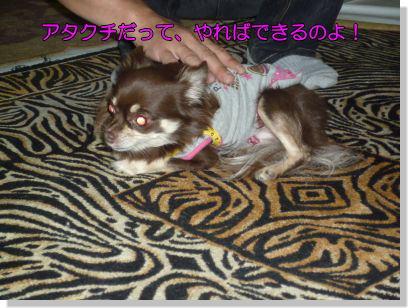 image6_20111112233334.jpg