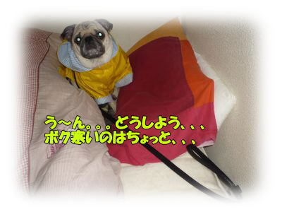 image6_20120115030153.jpg