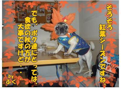 image7_20111117024627.jpg