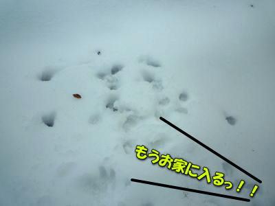 image7_20120109020942.jpg