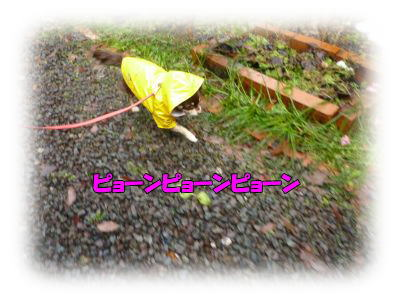 image7_20120115030611.jpg