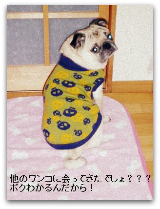 image8_20111219013847.jpg