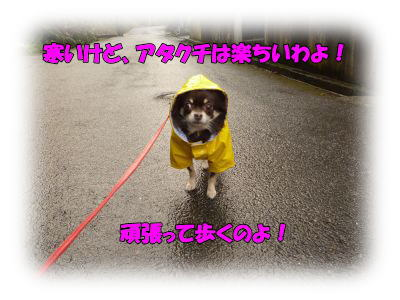 image8_20120115030750.jpg