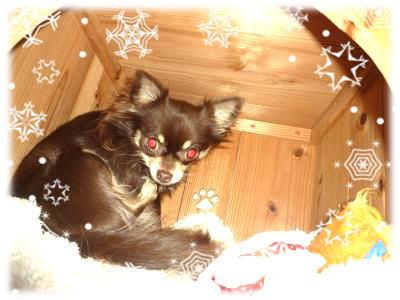 image_20111209013225.jpg