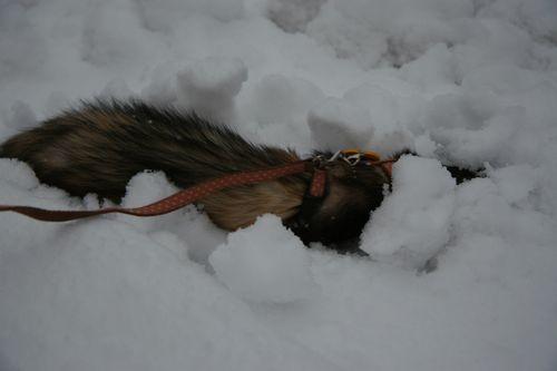 雪と遊ぶすもも