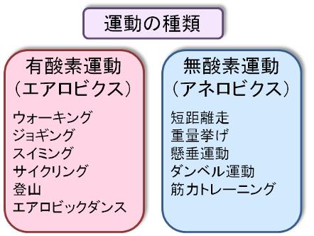 運動の種類2