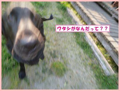 NEC_0422-1.jpg