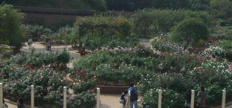 2011greenpark1.jpg