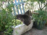 猫咲くプランター