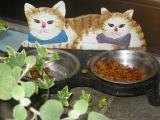 猫feeder