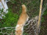きゅうり畑の猫