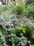 草取り前花壇