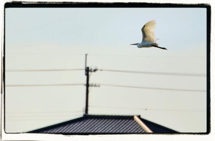 20110623_152a.jpg