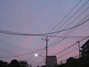 pinkusora2110605.jpg