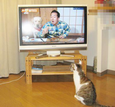 りぼんテレビ0711 (2)