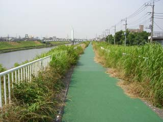 芝川サイクリングロード