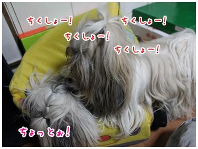 2011-05-30-06.jpg
