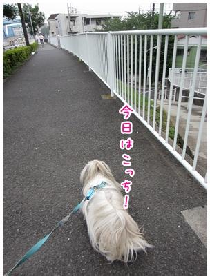 2011-06-11-03.jpg