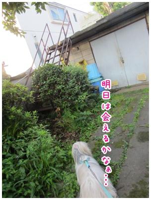2011-06-22-10.jpg