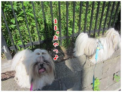 2011-07-22-05_20110722102731.jpg