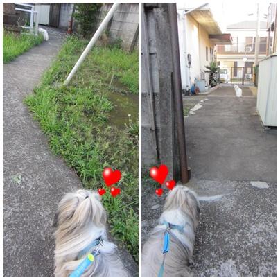 2011-07-24-11.jpg