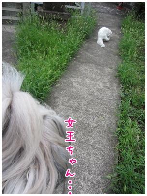 2011-08-05-09.jpg