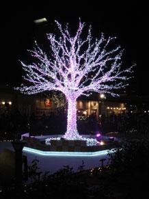 2011-12-14e.jpg