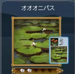 syokubutu2.jpg