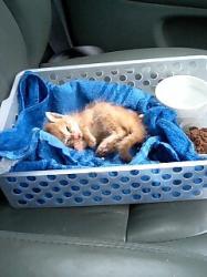 「うらちん」と一緒に動物病院へ 車内にて