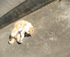 番猫 たわし ほしがり
